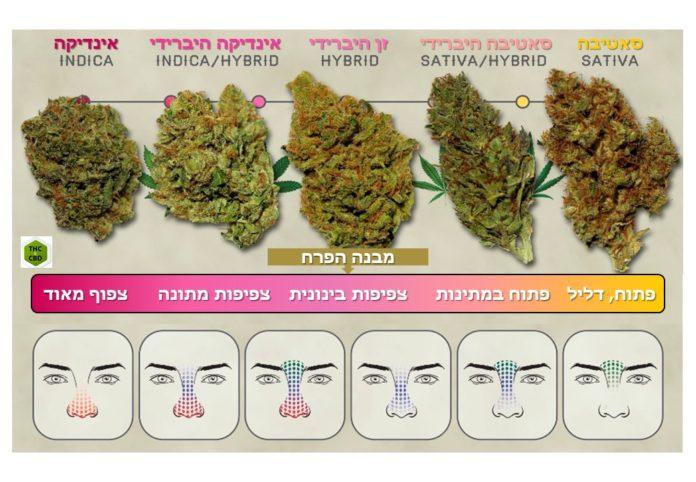 סוגי קנאביס רפואי - רשימת זני קנאביס רפואי בישראל- כל הספקים בארץ