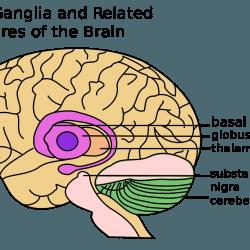 CBD לטיפול באלצהיימר - מדענים נשאו את עיניהם לעבר קנבידיאול הלא הוא, CBD.