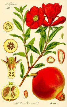 שמן זרעי רימון