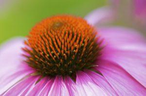 האם הגישה האופטימיות עוזרת לטיפול בסרטן?