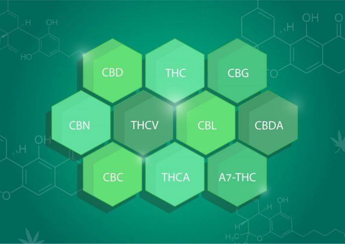 החומרים הפעילים בצמח הקאנביס | יותר מ-400 תרכובות הנמצאות בקנאביס