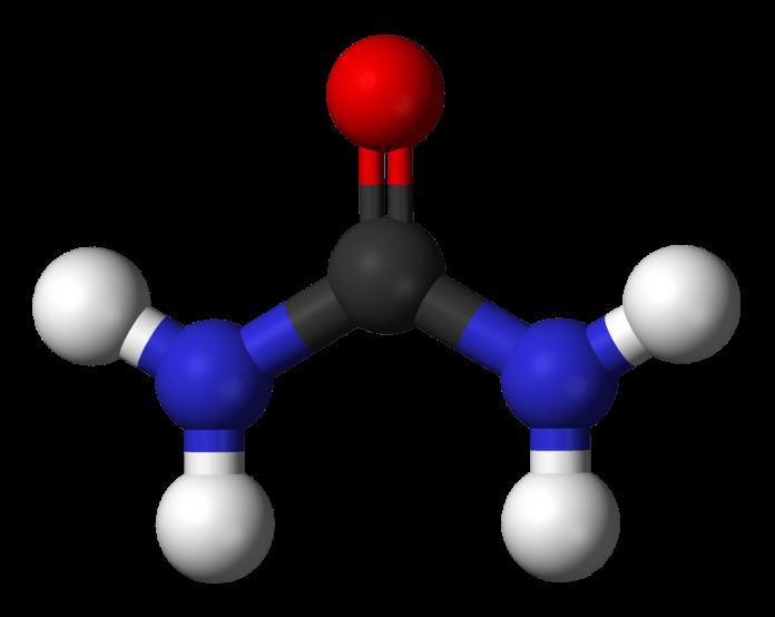 שמן קנאביס ומערכת הדם - שמן קנאביס המערכת החיסונית ושאר איברים