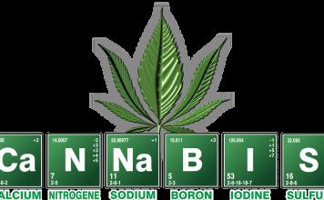 שמן קנאביס - שמן קנביס THC&CBD מאמרים ומחקרים בנושא תמצית קנאביס