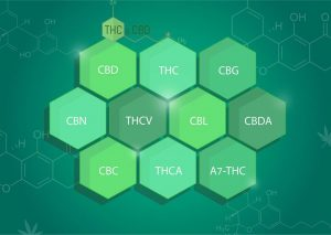 צמח הקנאביס - ההיסטוריה המדעית של צמח הקנאביס