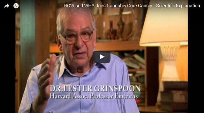 כיצד ומדוע קנאביס מרפא סרטן - הסבר מדעי