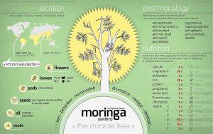 מורינגה