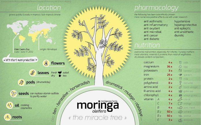 מורינגה המורינגה משתקת את האנזים החיידקי שגורם לסוכרת ולדלקת הפרקים