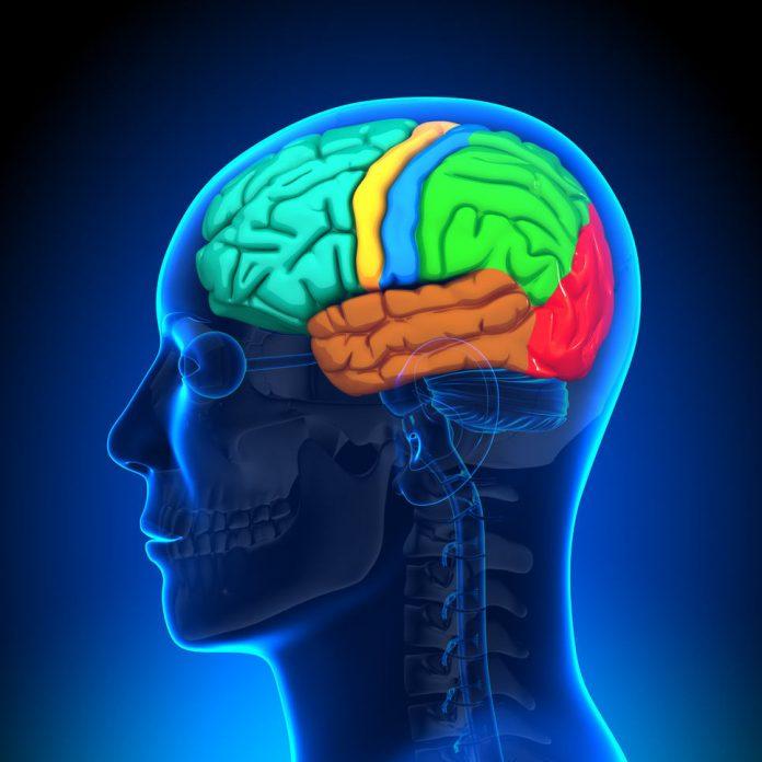 טי אייץ סי מונע נזק מוחי - מניעת מוות תאי וקידום פקטורי גדילה