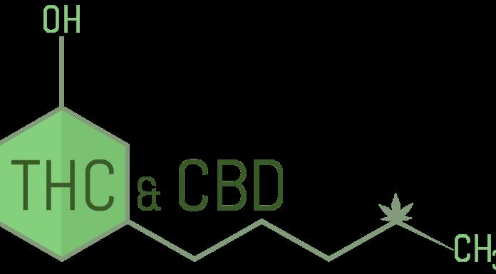 שמן קנאביס - שמן הקנביס THC&CBD מאמרים ומחקרים בנושא הקנאביס