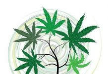 היתרונות הרפואיים של THC - איך החומר הפעיל טי אייץ סי מרפא את גופנו