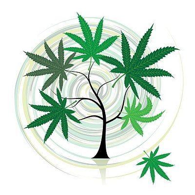 קנאביס והתפתחות האדם - האם האדם נוצר עבור צמח הקנאביס או ההיפך?