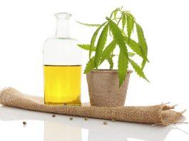 טיפול בשמן קנאביס