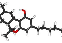 THC והקשר למניעת אלצהיימר - שלושת הניסויים הציגו עיכוב מוחלט של AChE, ויותר מכך, THC נקשר לא רק לאתר הפעיל אלא גם לאתר הפרפיראלי של האנזים