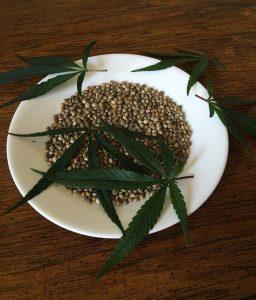שמן זרעי המפ כתוסף תזונה