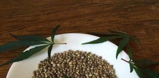 שמן זרעי המפ Archives - שמן קנאביס