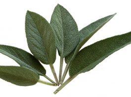 שמן קנאביס   שמן קנביס הטיפול בשמן תמצית הקנאביס 100%טבעי