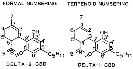 סגולות ה THC מחקרים עדכניים סגולות הTHC - שמן קנאביס