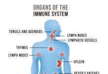 המערכת החיסונית
