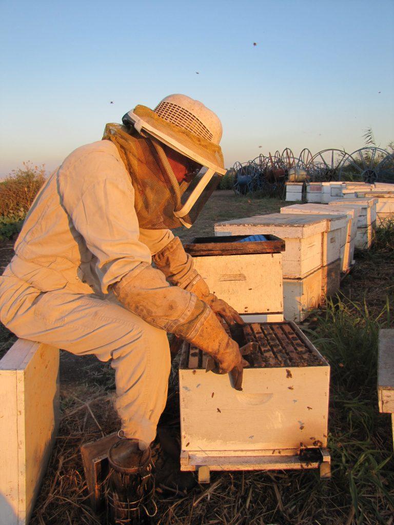 דבש - פרופוליס דבש למטרות ריפוי - הסיפור של דבש כתרופה לתחלואות רבות