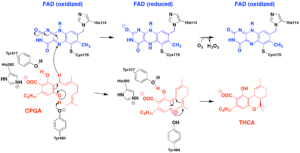 הגנטיקה של קנאביס