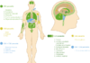 רפואה טבעית על הרפואה הטבעית ואיך היא תורמת לחיינו הבריאותיים