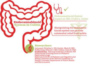 מרכיבי המערכת האנדוקנבינואידית