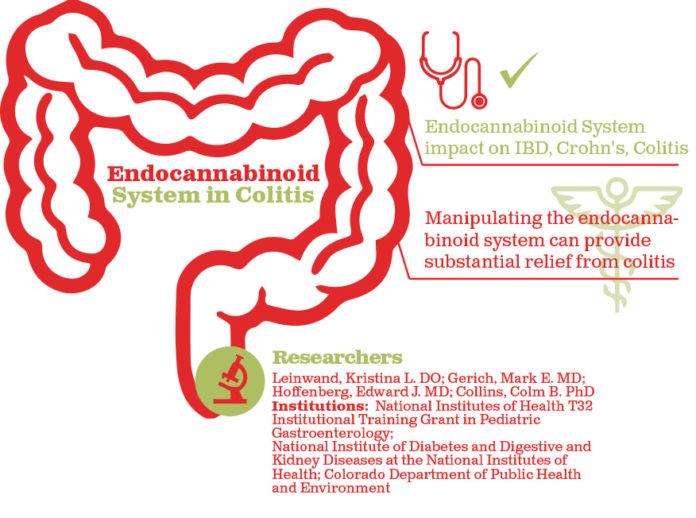 מרכיבי המערכת האנדוקנבינואידית - טיול מקיף בין מרכבי המערכת האנדוקנבינואידית