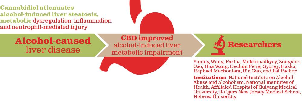 רשימת מוצרי CBD נתמקד במוצרים השונים והמומלצים ביותר המיוצרים מהחומר CBD