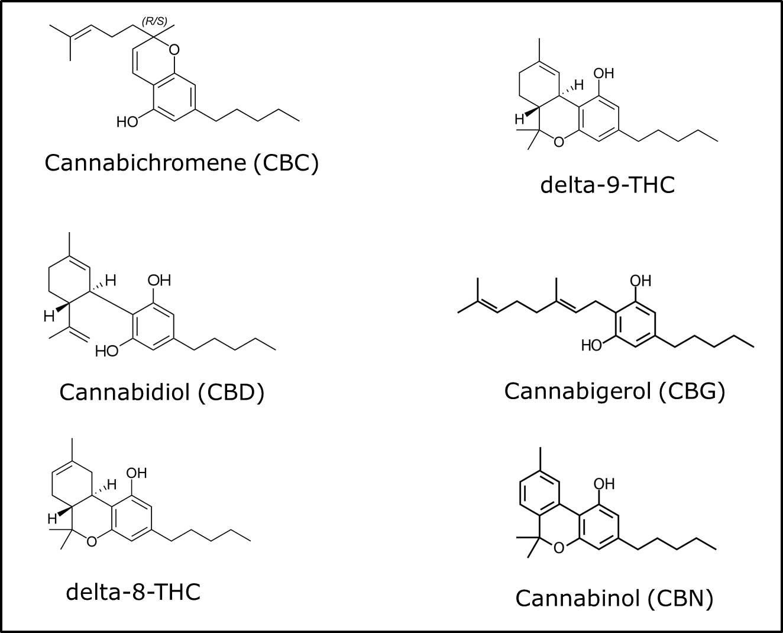 שמן קנאביס קנבינואידים thc-cbd