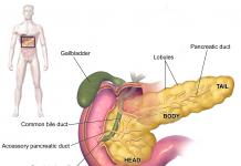 המדריך לקולטני קנבינואידים - שמן קנאביס רפואה טבעית thc&cbd