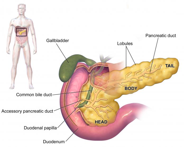 שמן קנאביס נגד סרטן בלבלב - שמן קנאביס מריחואנה רפואית נגד סרטן בלבלב