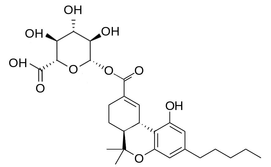 THC נגד דלקת ריאות - שמן קנאביס CBD&THC דלקת ריאות