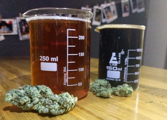 בירה עם THC - שמן קנאביס בירה קנאביס - בירה עם THC