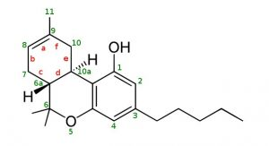 THC וחמשת החושים