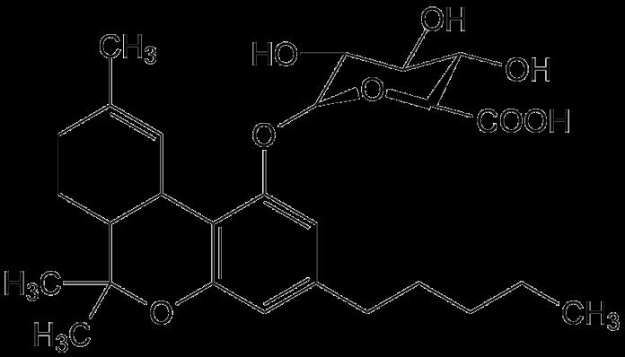 THC וחמשת החושים - שמן קנאביס THC וחמשת החושים