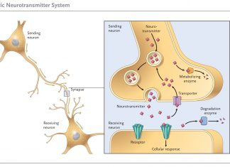 שמן קנאביס - שמן הקנאביס THC&CBD מאמרים ומחקרים בנושא הקנאביס
