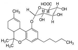 THC נגד דלקת ריאות