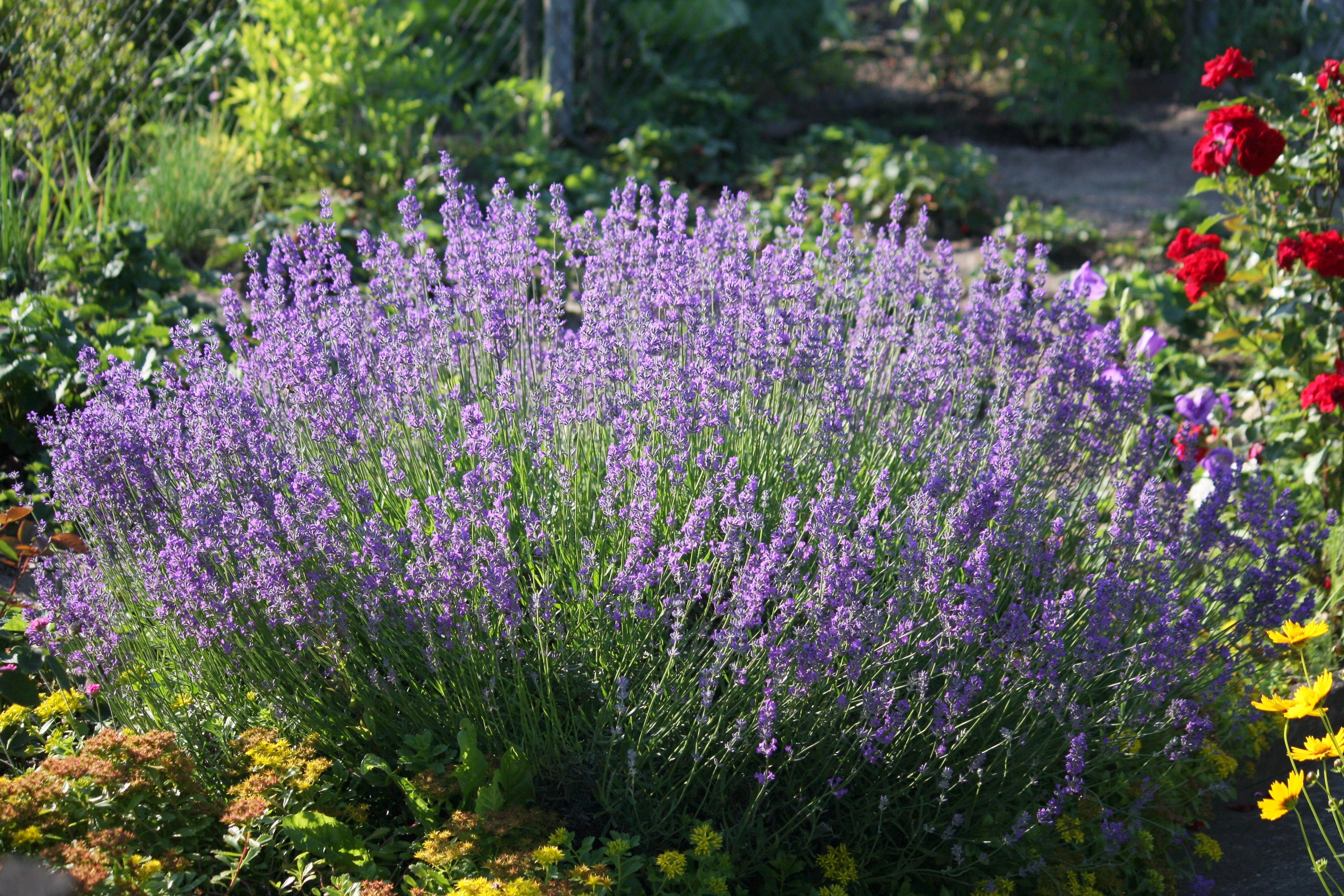 צמחי מרפא לטיפול בסרטן