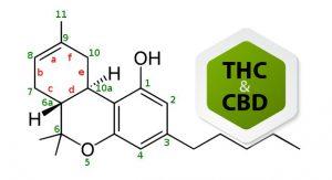 מומחה ל THC - הלוחש ל - THC : מומחה ל- THC&CBD - שמן קנאביס