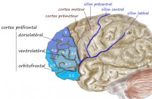 קנביס נגד פגיעות נירולוגיות