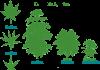 פירות יער - בשל ערכם התזונתי הגבוה פירות יער רבים שמן קנאביס