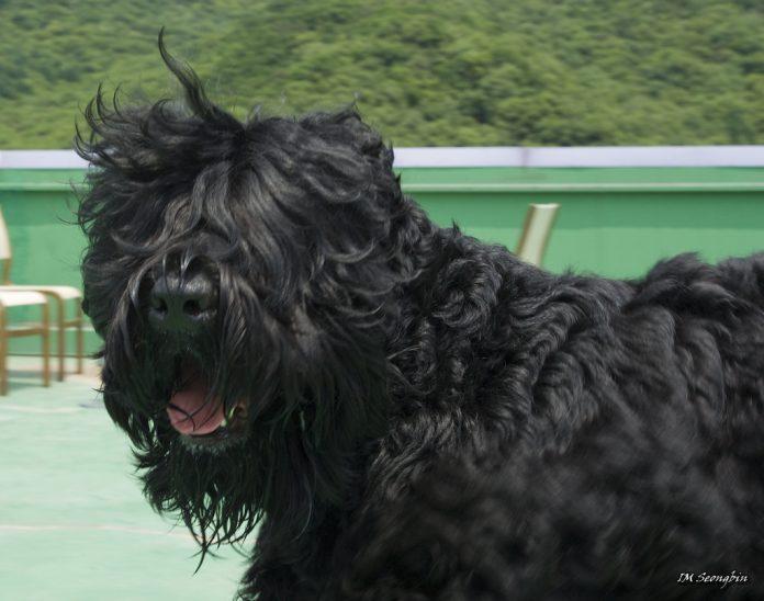 שמן CBD לכלבים - שמן CBD לכלבים שמן סי בי די - שמן קנאביס