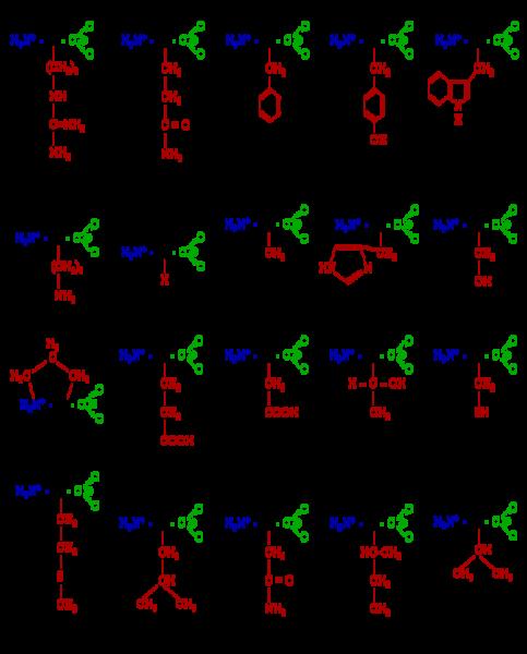 חומצות אמינו וקנאביס - (amino acid) הן תרכובות אורגניות של חלבונים - טבלת כמויות של חומצות אמינו בצמח הקנאביס לפי חלקיו