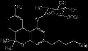 חשיבות היחס בין THC ל CBD - מדע ומחקרים עדכניים - שמן קנאביס