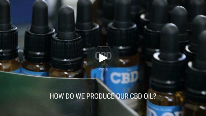 שמן CBD - מיהו וממה הוא עשוי ? - שמן קנאביס שמן סי בי די