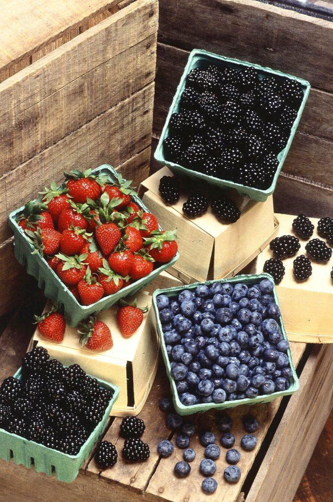 בריס פירות יער - שמן קנאביס פירות יער נוגדי חמצון berries