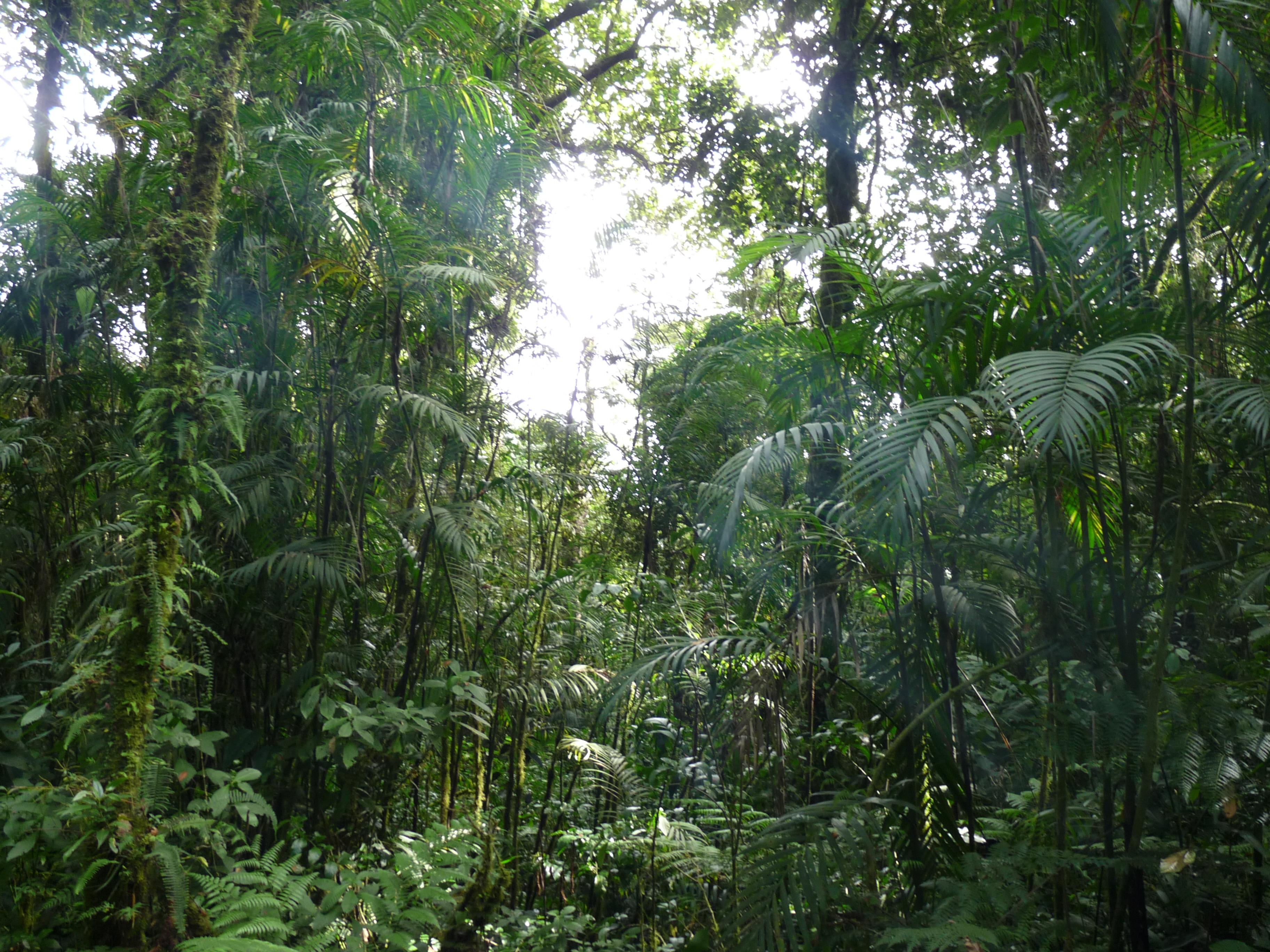 בריס פירות יער