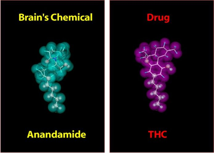 נשאים של THC ו CBD - שמן קנאביס נשאים של THC ו-CBD