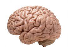 CBD וסכיזופרניה - מורכבות מחלת הסכיזופרניה אשר לא מוגדרת על ידי מספר גנים