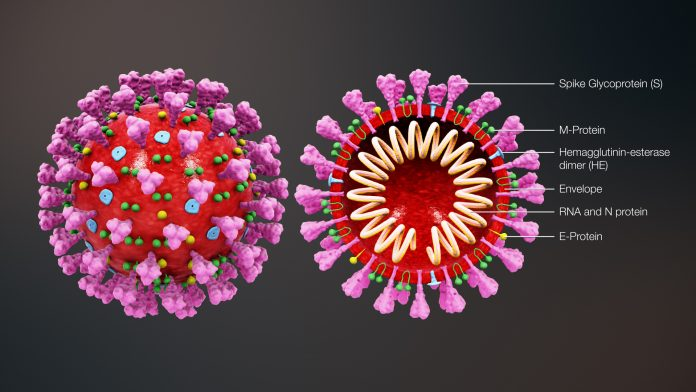 וירוס הקורונה - הדבש ליד העוקץ של הקורונה - שמן קנאביס